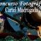 Concurso Fotográfico Cartel Madrugada 2020
